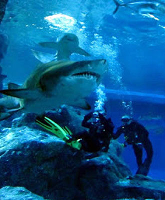 Diving with Sharks for Kesho